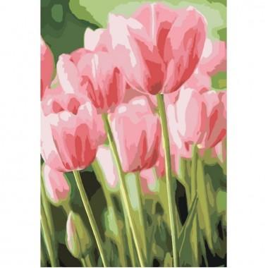 Картина за номерами Букети  Весняні тюльпани  35*50см